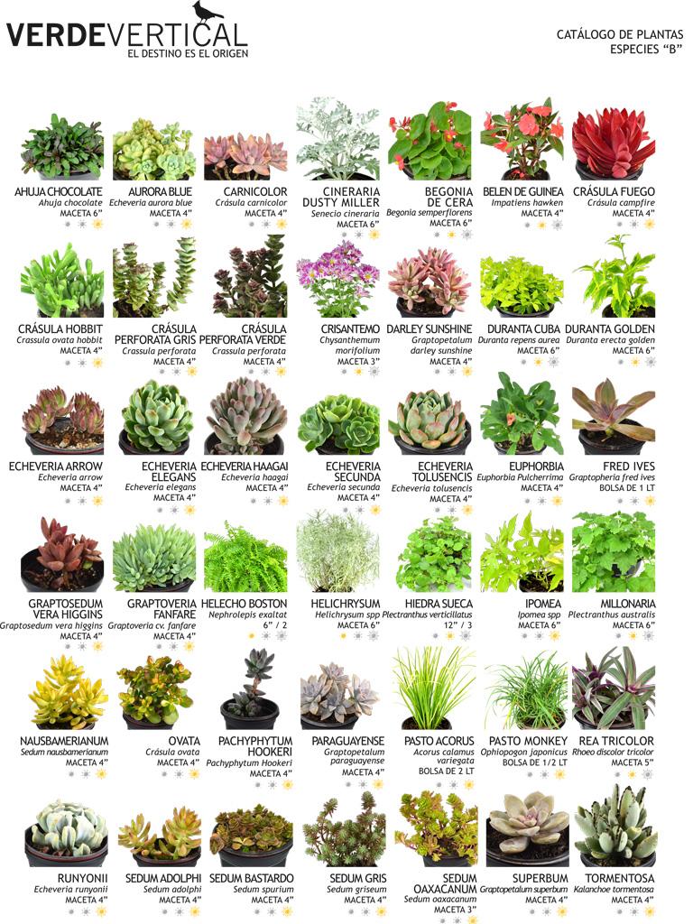 Paleta vegetal vertical gardens for Tipos de jardines